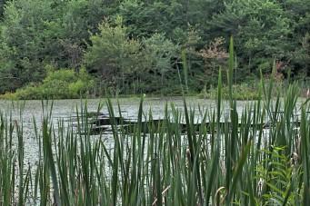 Sloan's Crossing Pond Walk